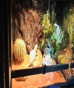 Lót nền chuyên dụng dành cho bò sát sống trong môi trường sa mạc( cát sa mạc có sẵn vitamin ) .