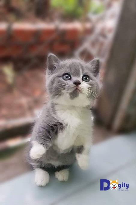 Trên thị trường có rất nhiều sản phẩm cát vệ sinh tiện dụng để huấn luyện cho mèo Aln.