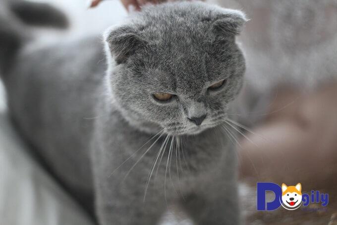 Việc nói không để ngăn chặn những hành vi sai trái là quan trọng nhất khi huấn luyện mèo.