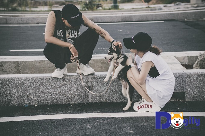 Chó Husky ăn gì? Tại sao cần lưu tâm tới chế độ ăn của chó Husky