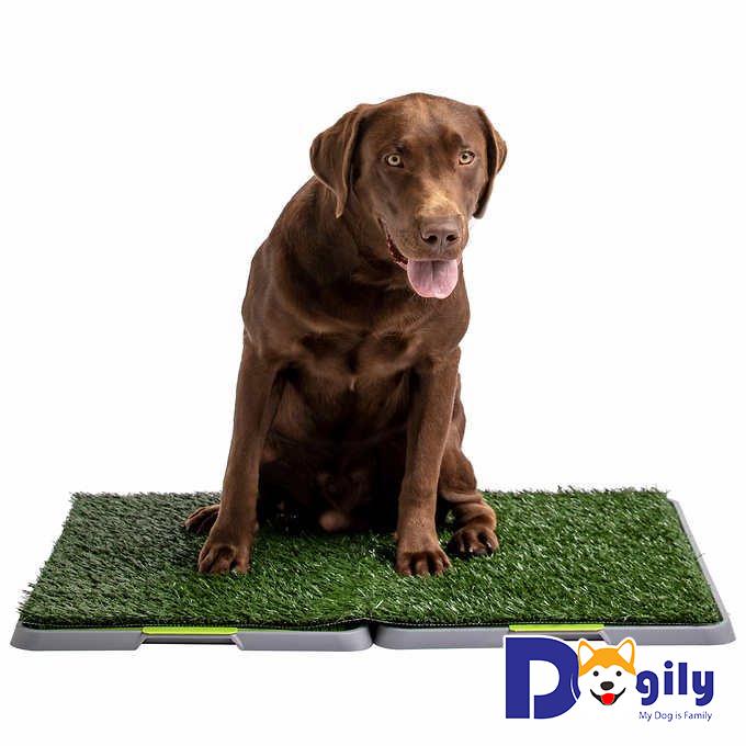 Cách chọn chó khôn theo kinh nghiệm của người nuôi chó chuyên nghiệp