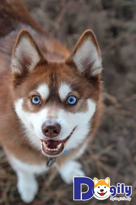 Cách đặt tên hay cho chó phổ biến nhất