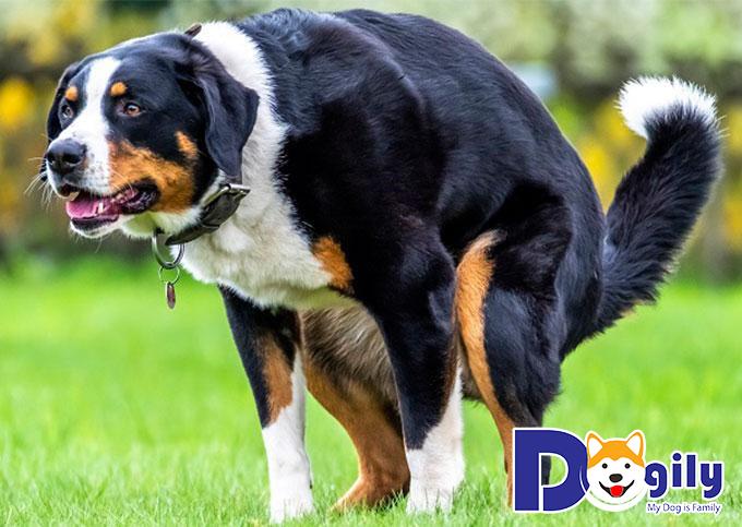 Chó bị táo bón