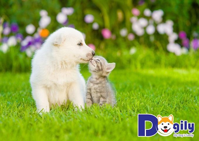 Chó con dễ thương yêu thú
