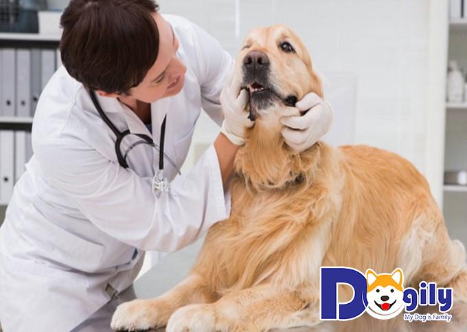 Cho cún đi bác sĩ thú y
