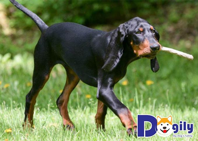 Chú chó săn dũng mãnh