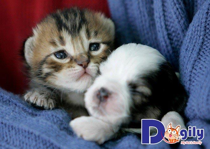 Chú mèo con dễ thương