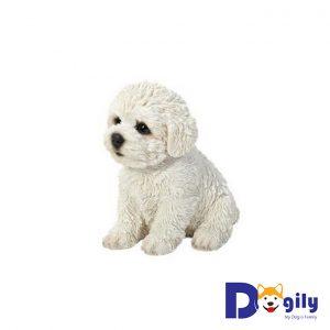 Đặc điểm ngoại hình của chó Bichon Frise