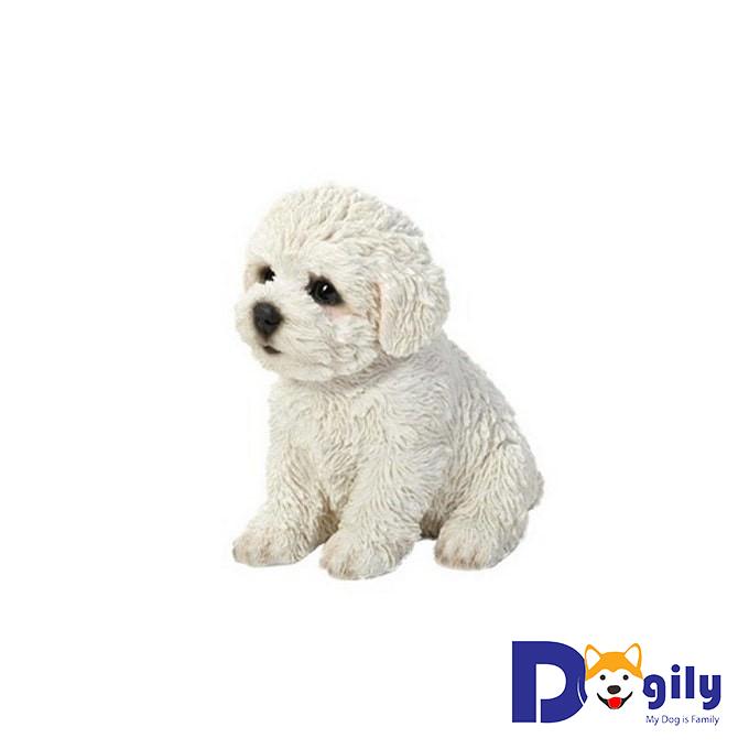 Chó Bichon Frise – Cục bông di động siêu cấp đáng yêu