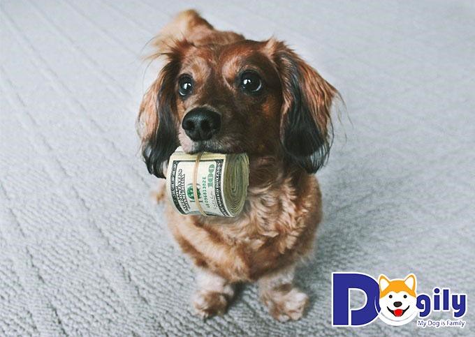 Dogily Petshop - địa chỉ uy tín để chọn mua những chú chó thông minh và khỏe mạnh nhất