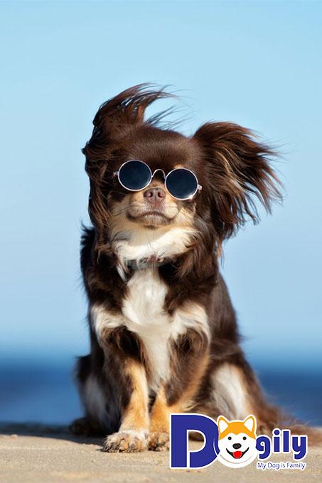 Dogily Petshop là địa chỉ được các tín đồ yêu thú cưng lựa chọn