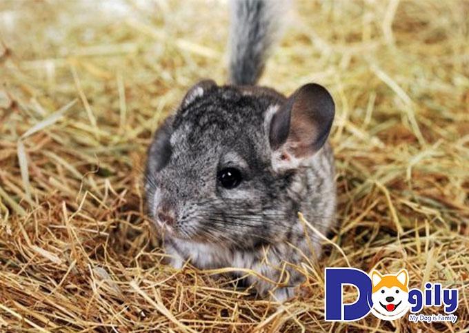 Giá bán sóc chuột phụ thuộc vào những yếu tố nào?