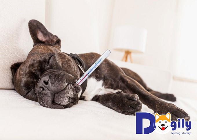 Giữ cún trong nhà khi bị ốm