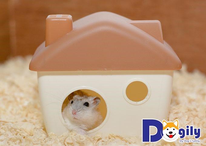 Hamster sẽ hạnh phúc hơn nếu được yêu thương