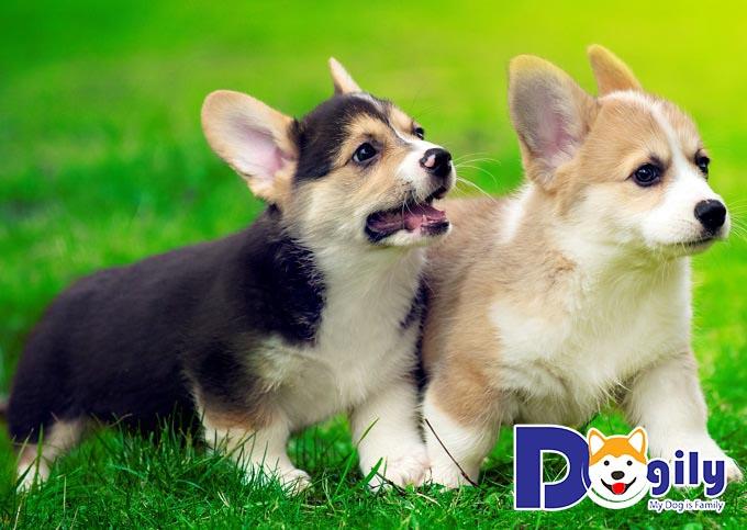Hình ảnh cún con đáng yêu