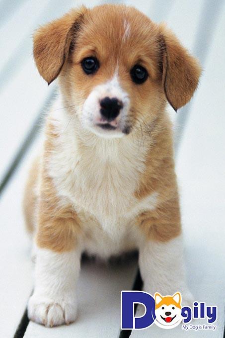 Hình chó con dễ thương