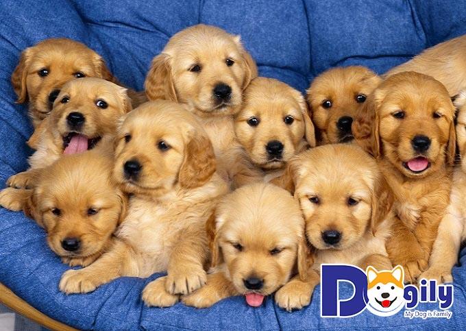 Hình những chó con dễ thương
