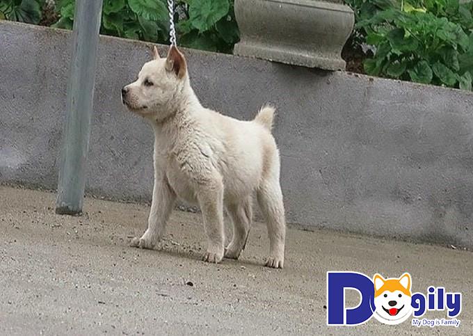 Liên hệ mua bán chó Mông Cộc tại Petsily