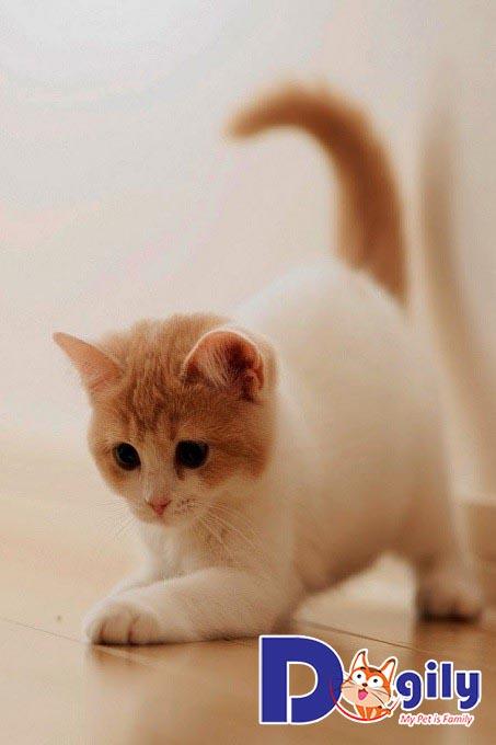 Mèo ăn gì để bổ sung canxi?