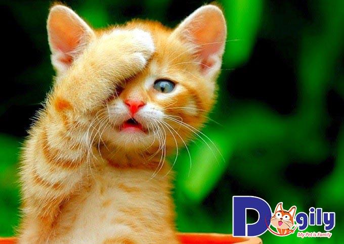 Nên cho mèo ăn gì khi 1 tháng tuổi?
