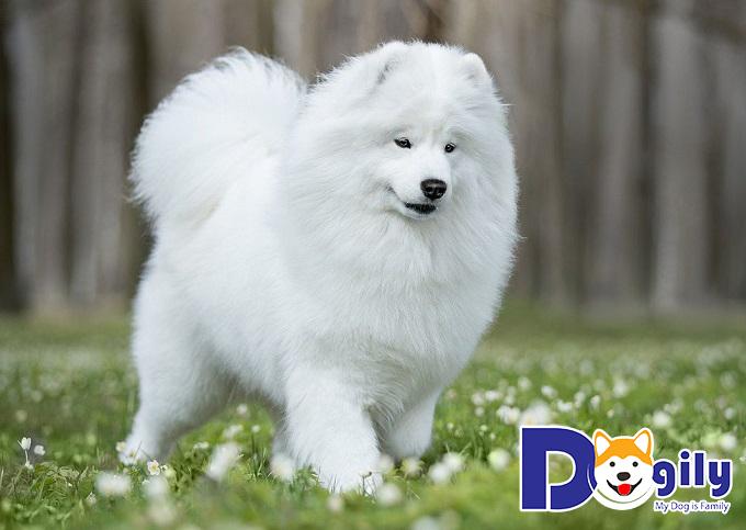 Những con chó đẹp nhất khu rừng Taiga