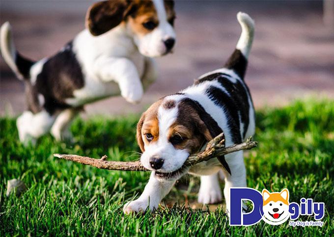 Những em thú cưng cute sẽ giúp bạn xua tan muộn phiền cuộc sống
