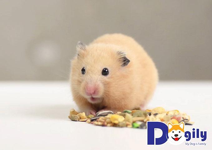 Những loại rau xanh, hoa quả nên tránh trong cách chăm sóc Hamster