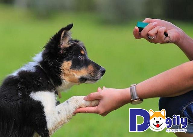 Huấn luyện chó giá bao nhiêu và những thông tin cơ bản bạn nên biết