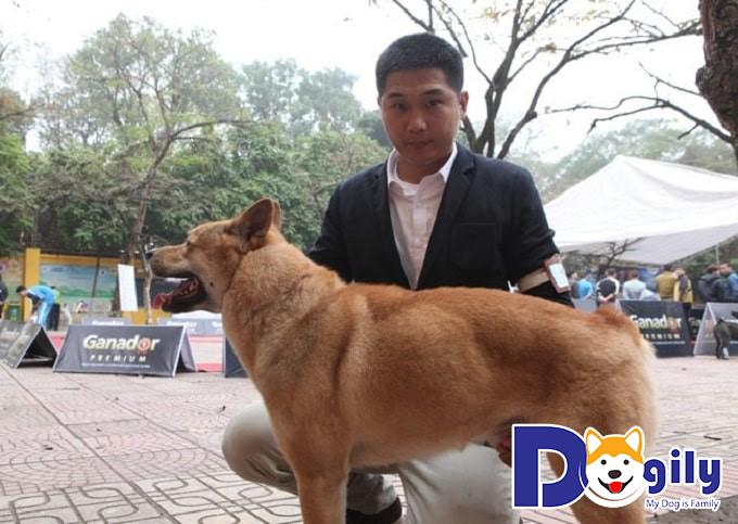 Quyền lợi của khách hàng khi mua chó Mông Cộc tại Petsily