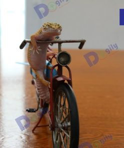 Hình sản phẩm thằn lằn da báo leopard gecko đâng bán tại Dogily Petshop.