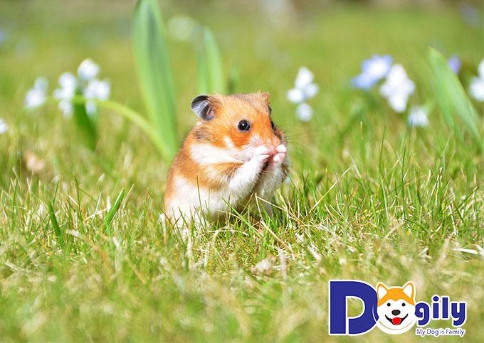 Thực đơn dinh dưỡng - Kiến thức cơ bản khi nuôi Hamster bạn nên biết