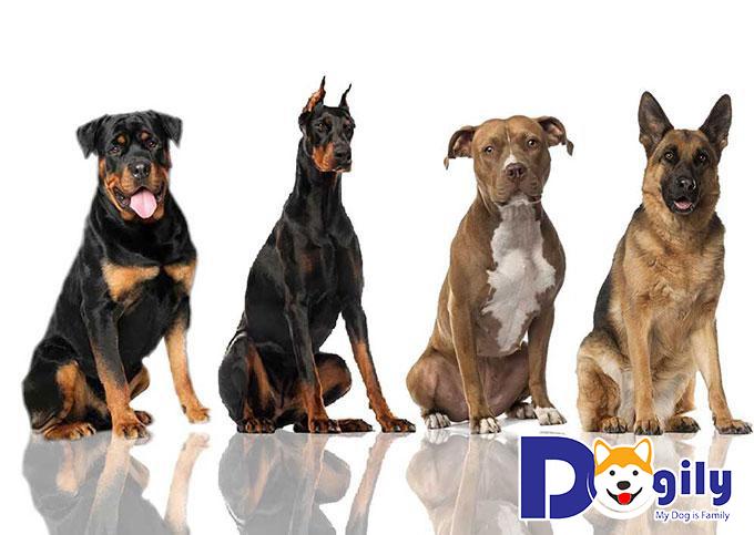 Tư vấn lựa chọn mua chó cảnh dựa theo các yếu tố