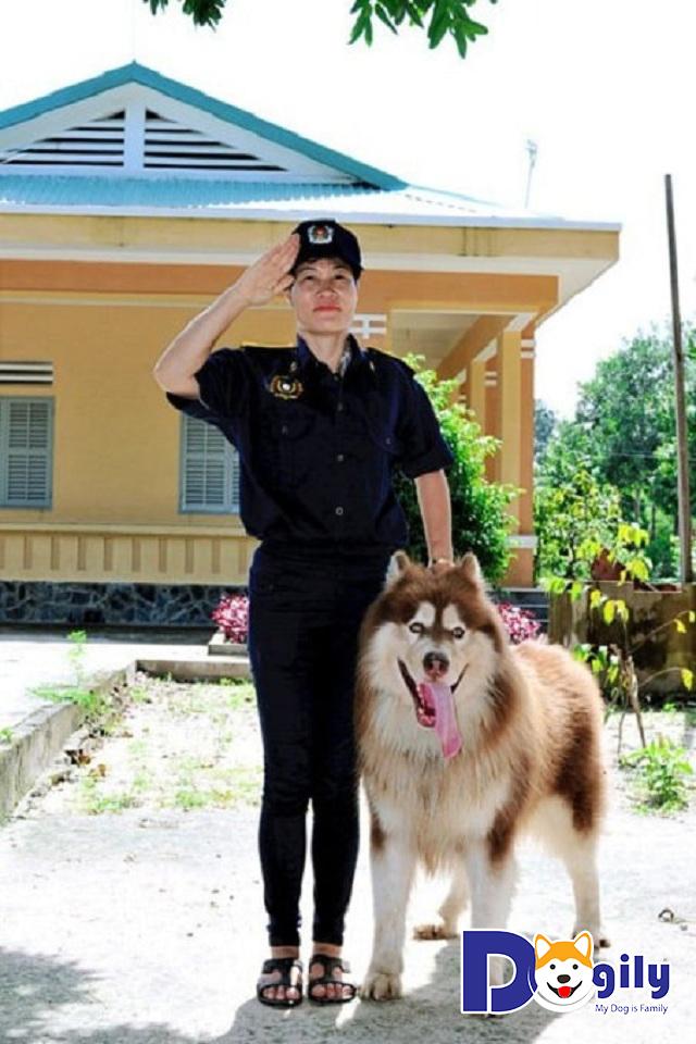 Vì sao chi phí huấn luyện thú cưng giữa các nơi có sự chênh lệch?