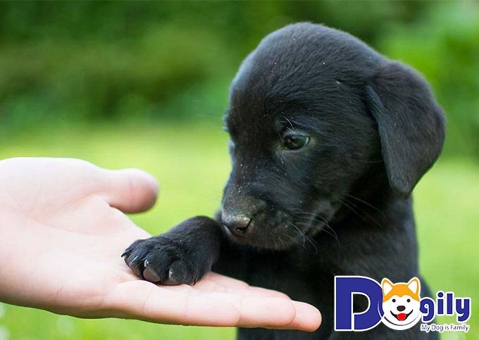 Vì sao nên nuôi một con chó Mực?