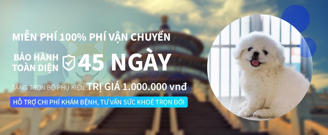 Chính sách bảo hành và khuyến mãi đối với khách hàng mua bán chó Bắc Kinh lai Nhật (BKLN) của Dogily Petshop.