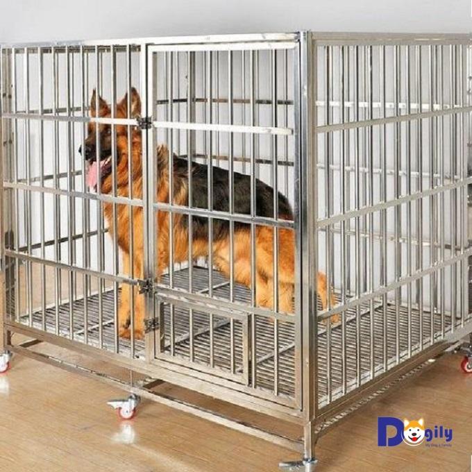 Một mẫu chuồng cho chó Becgie bằng Inox.