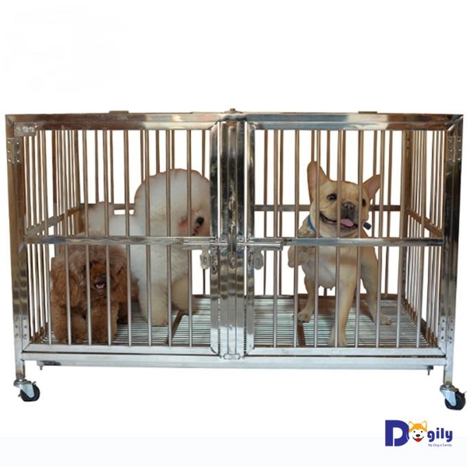 Mẫu chuồng chó inox đôi có hai ngăn dành cho các giống chó nhỏ như bull Pháp, Beagle, Poodle toy, tiny