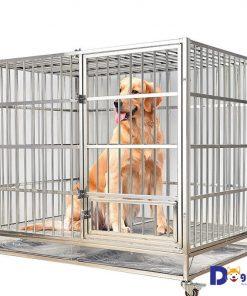 Một mẫu chuồng chó inox dành cho chó có kích thước lớn như Golden Retriever.
