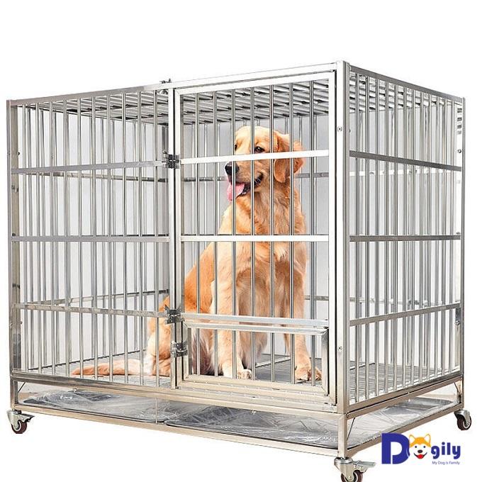 Chuồng chó inox đẹp, giá rẻ đang bán tại Dogily Petshop Tphcm và Hà Nội.