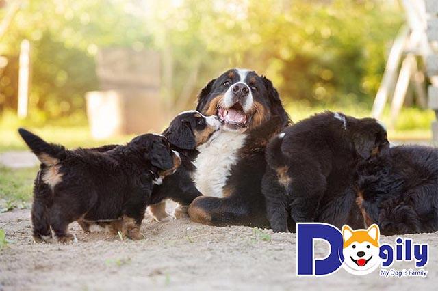 """Cách nuôi chó con cơ bản dành cho cả những bạn """"sen"""" vụng về nhất"""