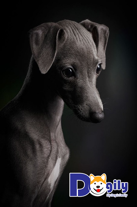 """Bức ảnh hạng nhất mục """"Chó con"""""""