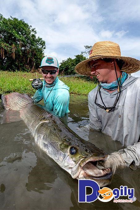 Cá hải tượng có ăn được không? Các mối đe dọa đến cá hải tượng