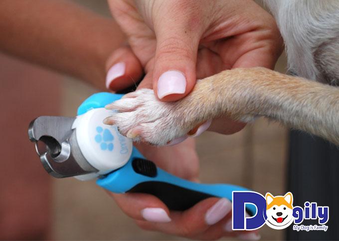 Các bước cắt móng cho chó