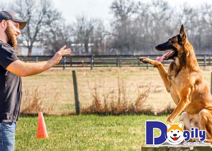 Cách dạy chó ngồi theo hiệu lệnh