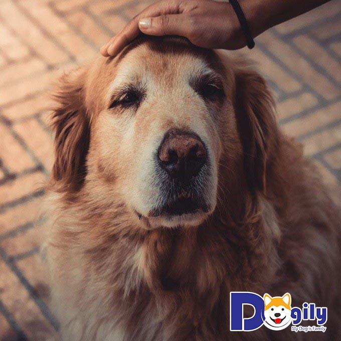 Nguyên nhân chó ỉa ra máu và cách xử lý kịp thời, an toàn với căn bệnh Parvo