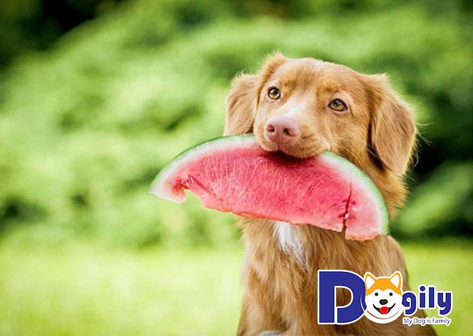 Cách nuôi chó cảnh theo chế độ ăn