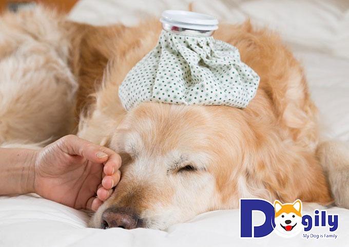 Cách phòng bệnh cho cún
