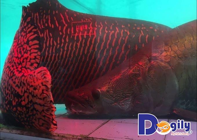 Cách phòng chống bệnh cho cá cảnh Tượng