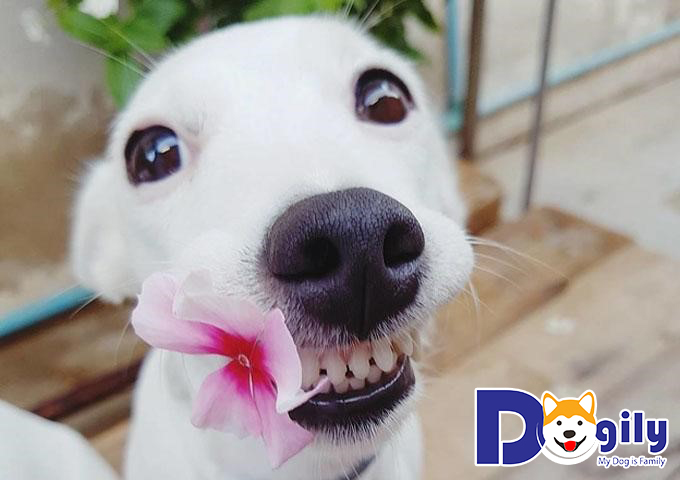 Chăm sóc cún cưng trong giai đoạn thay răng cần chú ý điều gì?