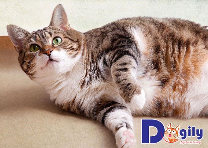 Chăm sóc mèo sau khi triệt sản